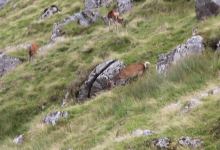 Deer, September, Glendalough